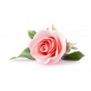 Розы натуральное эфирное масло 10 мл