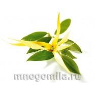 Иланг-Иланг натуральное эфирное масло 10 мл