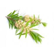 Чайное дерево натуральное эфирное масло 10 мл