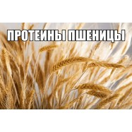 Протеины пшеницы 10 мл