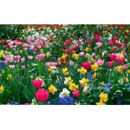 Цветочная поляна 10 мл
