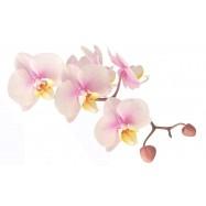 Орхидея 10 мл