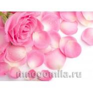 Роза 10 мл