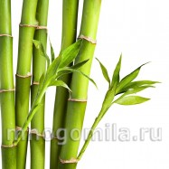 Бамбуковое молочко 10 мл