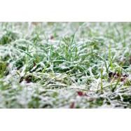 Первый снег 10 мл