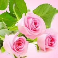 Свежесрезанные розы 10 мл