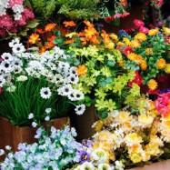Цветочный магазин 10 мл