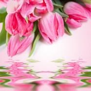 Тюльпан 10 мл