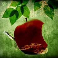Запретный плод 10 мл