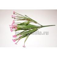 Цветущая осока, розовая