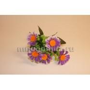 Маргаритки, фиолетовые